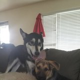 Photo for Looking For A Pet Sitter For 2 Dogs In Oak Harbor
