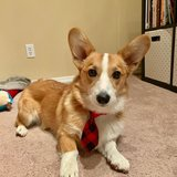 Photo for Looking For A Pet Sitter For 1 Dog, 2 Cats In Colorado Springs