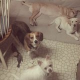 Photo for Looking For A Pet Sitter For 3 Dogs, 1 Cat In Wilmington