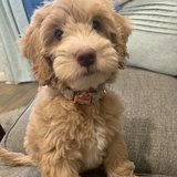 Photo for Puppy Sitter Needed In Concord