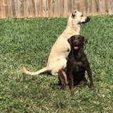 Photo for Looking For A Pet Sitter For 2 Dog, In Homestead.