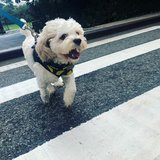 Photo for Looking For A Pet Sitter For 1 Dog In New York