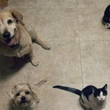 Photo for Looking For A Pet Sitter For 1 Dog, 1 Cat In Hialeah