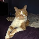Photo for Loving Adult Male Tabby Needs Long-Term Boarding