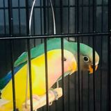 Photo for Looking For A Pet Sitter For 1 Bird In Hialeah