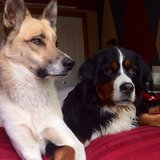 Photo for Walker Needed For 2 Dogs And Possible Overnight Stay In Broomfield