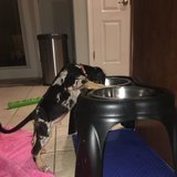 Photo for Looking For A Pet Sitter For 1 Dog In Tavares