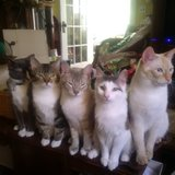 Photo for Sitter Needed For 4 Cats In Saint Cloud
