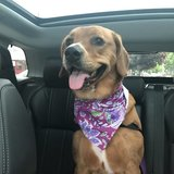 Photo for Looking For A Pet Sitter For 1 Dog In Providence