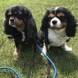 Photo for Walker/sitter Needed For 2 Dogs In Glenview