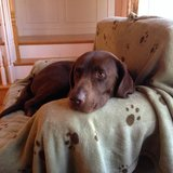 Photo for Looking For A Pet Sitter For 1 Dog In Andover