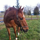 Photo for Sitter For 2 Horses In Gig Harbor