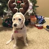 Photo for Sitter Needed For 1 Dog In Fair Oaks