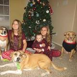 Photo for Walker Needed For 3 Dogs In Crowley