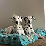 Photo for Dog Sitter Needed For Weekend