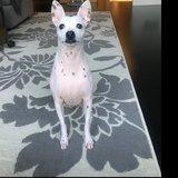Photo for Regular Dog Sitter