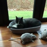 Photo for Sitter Needed For 1 Cat In West New York