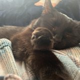 Photo for Sitter Needed For 2 Cats In Albuquerque