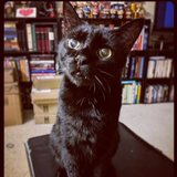 Photo for Sitter Needed For 1 Cat In New Rochelle