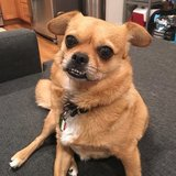 Photo for Looking For A Pet Sitter For 1 Dog In Los Angeles