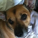 Photo for Sitter Needed For 1 Dog In Woodland Park