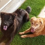Photo for Walker/Play Facilitator  Needed For 2 Dogs In Scottsdale