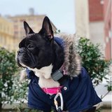 Photo for Sitter Needed For 1 Dog In Jersey City