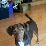 Photo for Looking For A Pet Sitter For 1 Dog, 1 Cat In Winter Haven