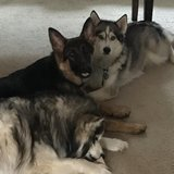 Photo for Pet And House Sitter