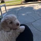 Photo for Puppy Sitter Needed In Santa Monica