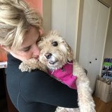 Photo for Special Needs 17-yr Female Cockapoo Looking For Sitter To Stay In Our South Loop Condo.
