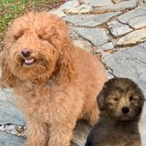 Photo for OVERNIGHT Puppy Sitter For MARCH 8-12