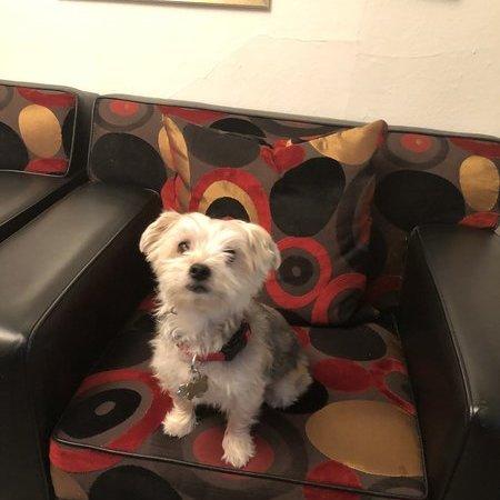 Pet Care Job in Newton, NJ 07860 - Seeking Dog Boarding Care - Care.com