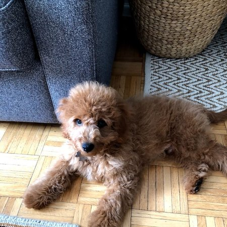 Pet Care Job in New York, NY 10280 - Walker Needed For 1 Puppy In New York - Care.com