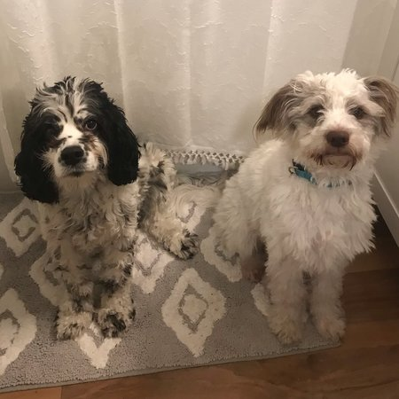 Pet Care Job in Alexandria, VA 22304 - Occasional Boarding Needed For 2 Adorable Pups! - Care.com