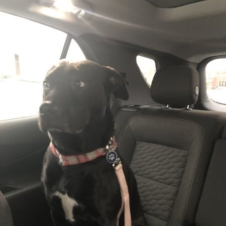 Pet Care Job in Hornell, NY 14843 - Afternoon Outing For 1 Dog - Care.com