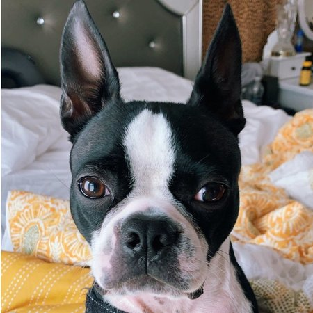 Pet Care Job in East Rochester, NY 14445 - Looking For Someone To Feed/ Walk My Dog - Care.com