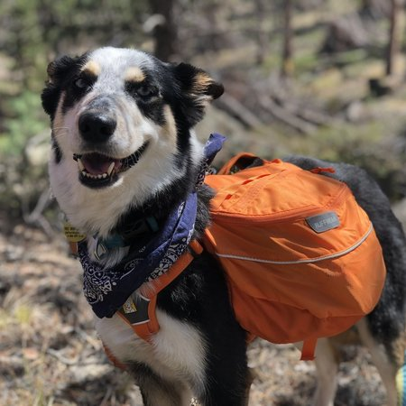 Pet Care Job in Fort Collins, CO 80526 - Looking For A Pet Sitter For 1 Dog, 2 Cats In Fort Collins - Care.com