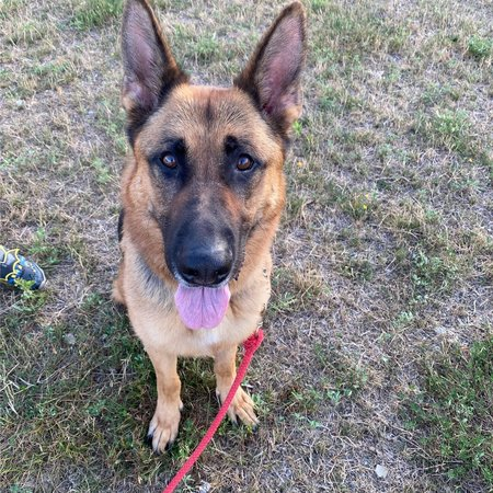 Pet Care Job in Akron, OH 44311 - Boarding For German Shepard - Care.com