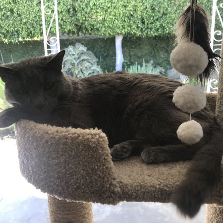 Pet Care Job in Alhambra, CA 91803 - Sitter Needed For 1 Cat In Alhambra Christmas ! - Care.com