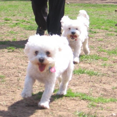 Pet Care Job in Union, NJ 07083 - Sitter Needed For 3 Dogs In Union In May - Care.com