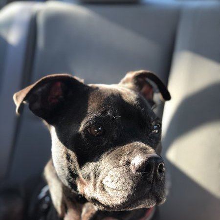 Pet Care Job in Jacksonville, FL 32217 - Looking For A Pet Sitter For 1 Dog In Jacksonville - Care.com