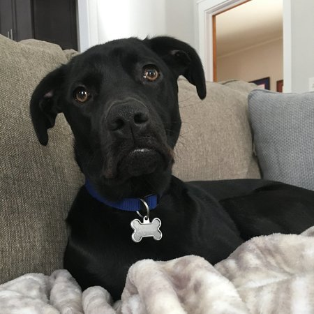 Pet Care Job in Stanhope, NJ 07874 - Sitter Needed For 1 Dog In Stanhope - Care.com