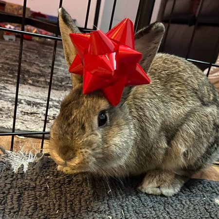 Pet Care Job in Centereach, NY 11720 - Need House Sitter For Two Weeks For Four Rabbits - Care.com
