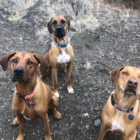 Pet Care Job In Carson City Nv 89701 Looking For A Pet Sitter For