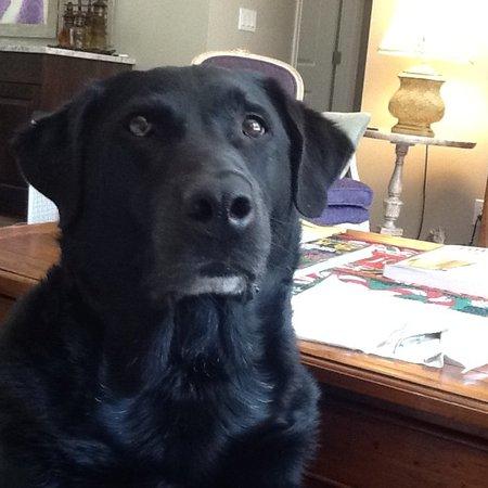 Pet Care Job in Bellevue, WA 98004 - Loving Sitter - Care.com