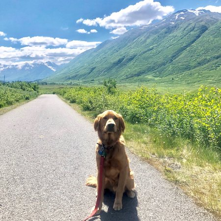 Pet Care Job in Wasilla, AK 99623 - In Home Dog Care For 2 Dogs - Care.com