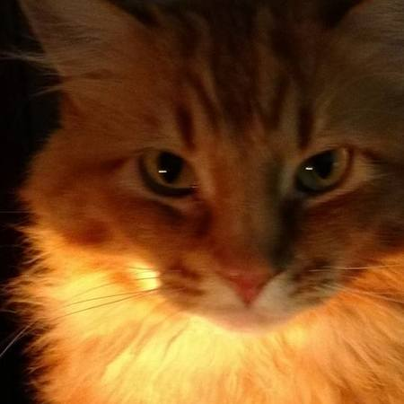 Pet Care Job in Seattle, WA 98115 - Sitter Needed For 1 Diabetic-Cat In Seattle - Care.com