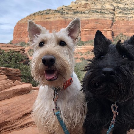 Pet Care Job in Peoria, AZ 85383 - Boarding Needed For 2 Dogs In Peoria - Care.com