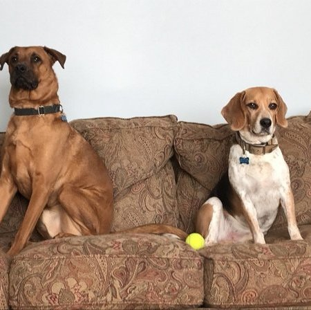 Pet Care Job in Newington, CT 06111 - Looking For A Pet Sitter For 2 Dogs In Newington - Care.com